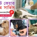 Pet-Care-Service-In-Dhaka-Motijheel